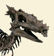 Dragon_Dracorex