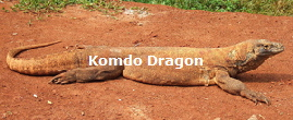 Dragon_Komodo